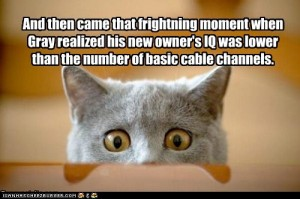 funny picture of cat realizing its owners stupidity