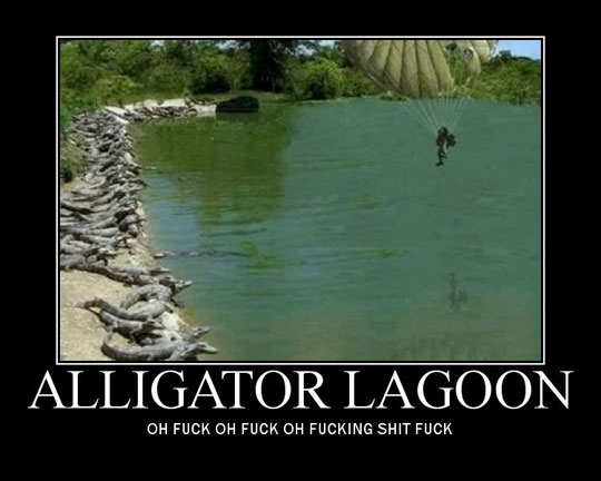 "Alligator Lagoon: ""Oh shit!"""