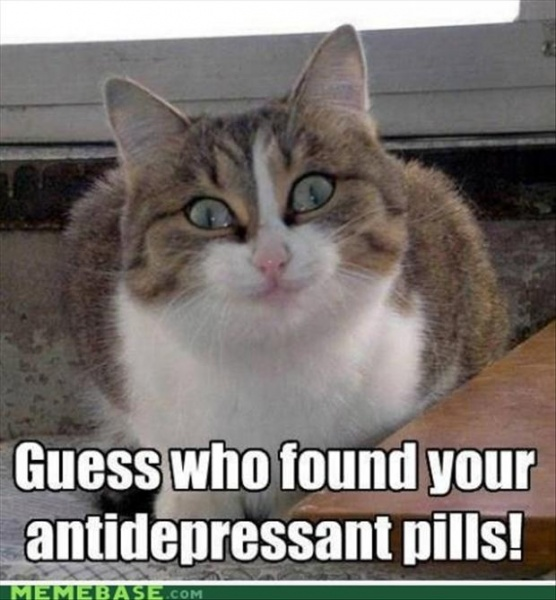 Funny, Big-Eyed Cat That Found Antidepressant Pills.