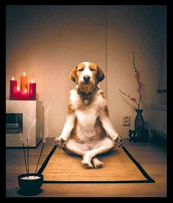 Dog Meditating - Funny Picture