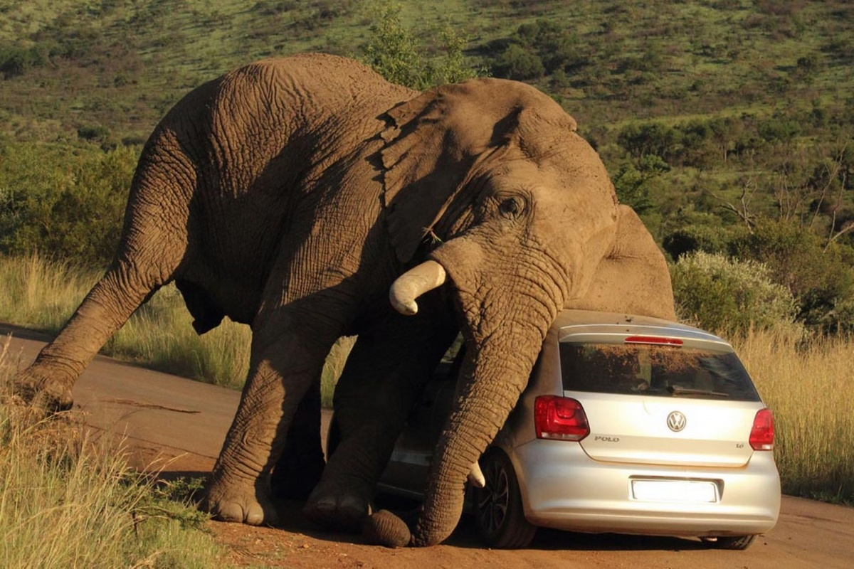 elephant-relieves-an-itch-on-a-small-car