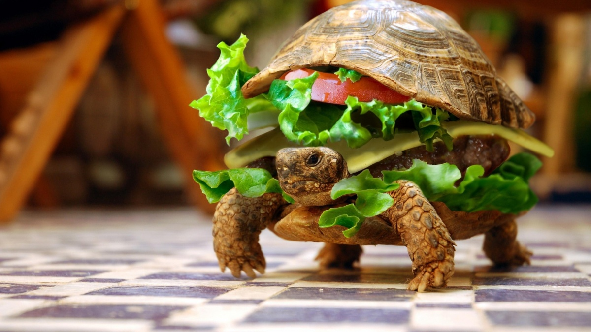 Funny-Eatable-Turtle