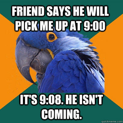 Paranoid Parrot Funny Pictures About Friend
