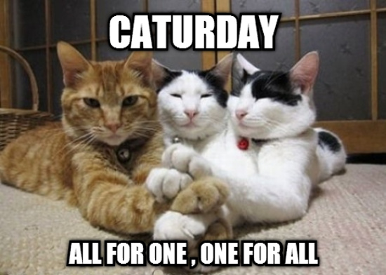 Caturday-All-For-One-One-For-All