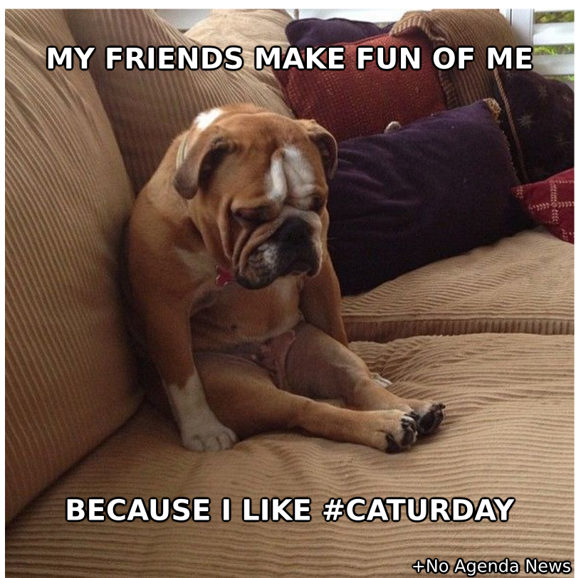 Dog-That-Likes-Caturday-Meme