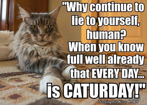 Every-Day-Is-Caturday