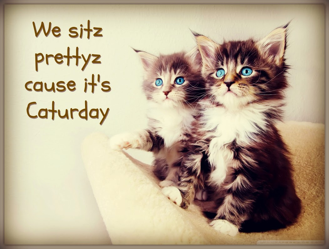 Caturday 2014: Cute Cat Gifs + Funny Kitten Pics