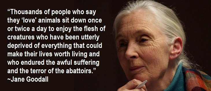 Jane Goodall Quotes About Animal Cruelty