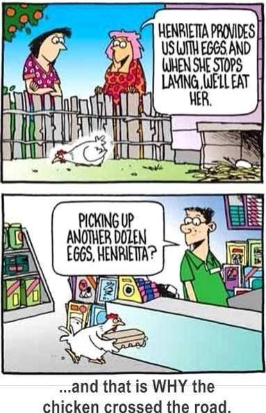 Why Did The Chicken Cross The Road Jokes