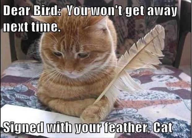 Attractive Cat Jokes About Bird