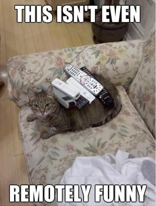 Cat Puns About Remote Controls