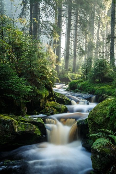 Beautiful Creek In The Forest