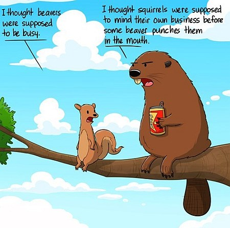 Beaver Meme About The Squirrels