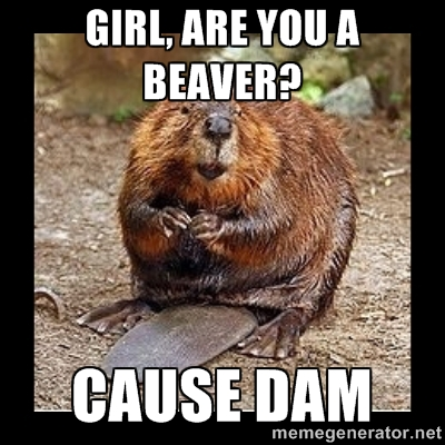 Beaver Meme About The Girl