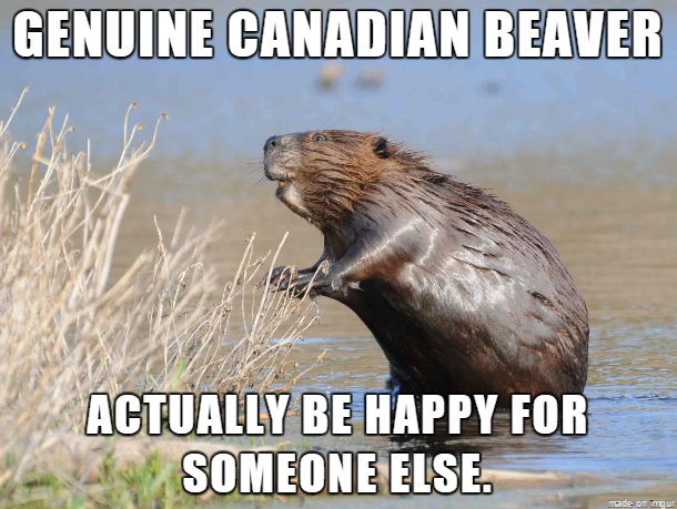 Meme About The Canadian Beaver