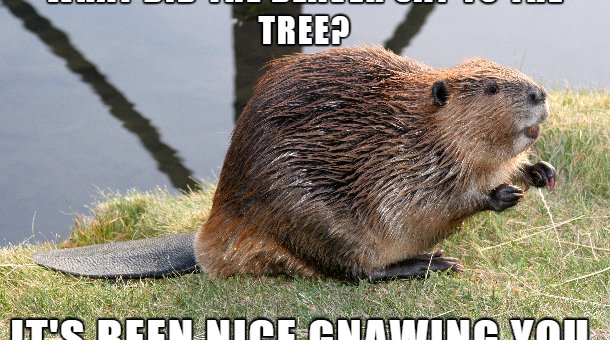 Good Beaver Pun About The Tree